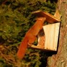 8. Wildlife Image 10 - Red squirrel
