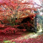 walled_garden4
