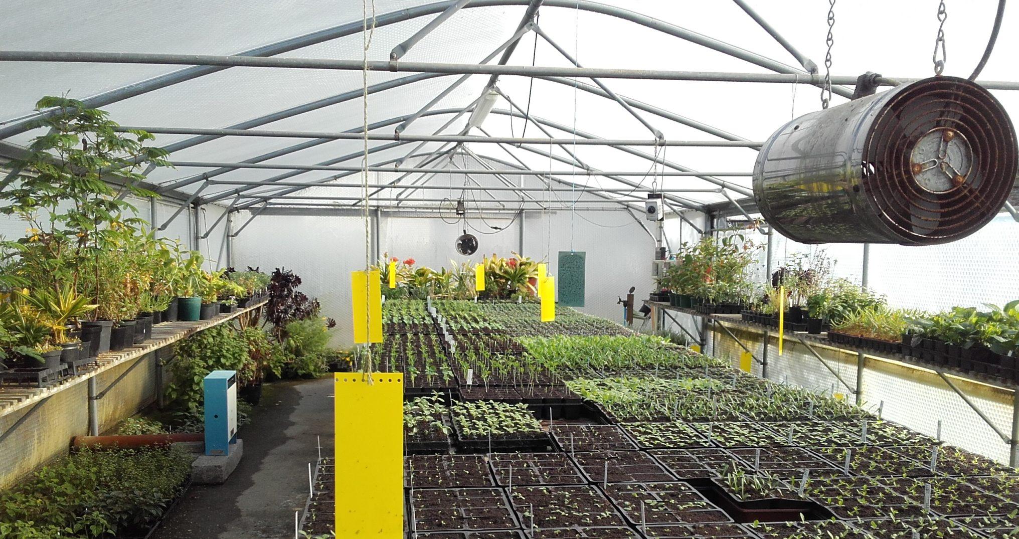 Greenhouse Spring seedlings - John
