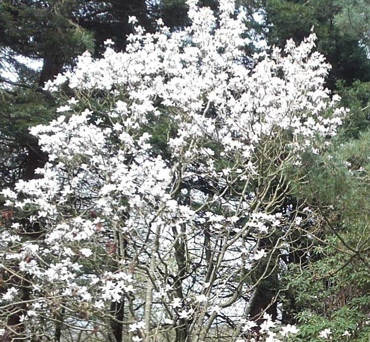 Magnolia - John